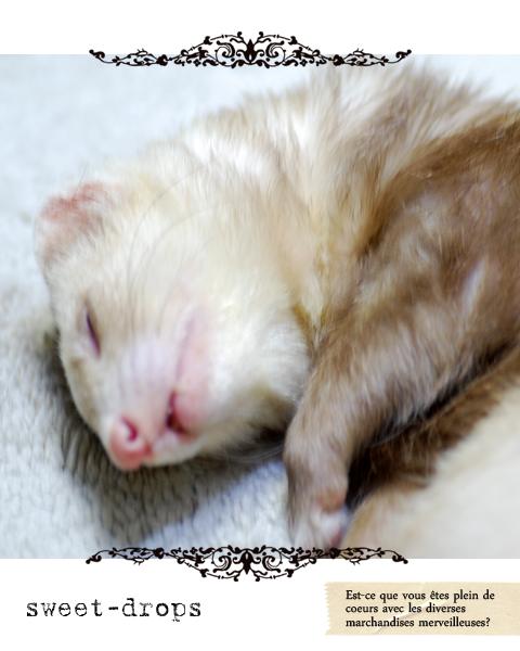 Ferret_017