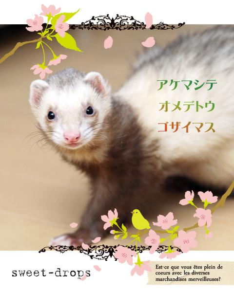 Ferret_019