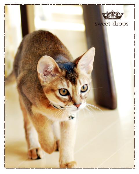Cat_017