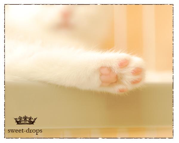 Cat_019