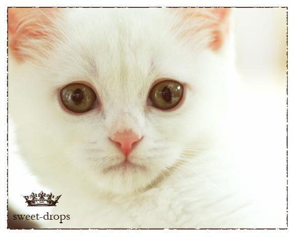 Cat_021