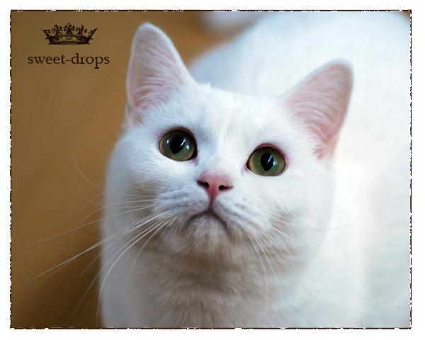 Cat_023